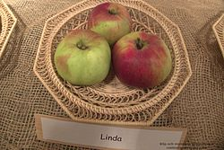 Linda Apple.jpg