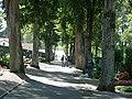 Lindenallee im Friedhof - panoramio.jpg