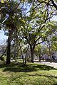 Lisbon (33349050960).jpg