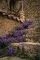 Little funny flowers (33778989903).jpg