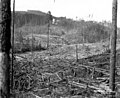 Logged area with high trestle, Sunset Timber Company, Washington, ca 1920 (KINSEY 2529).jpeg