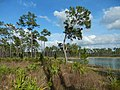 Long Pine Key Trails - panoramio.jpg
