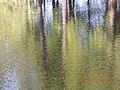 Lopukhinsky garden - panoramio (2).jpg