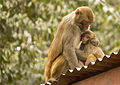 Love - Mother feeding her Kid.jpg