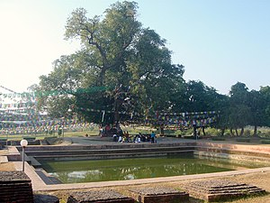 Bodhitree and the pond Mayadevi (Buddha's moth...