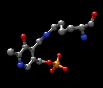 Tyrosine aminotransferase - Image: Lys 280plp