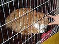 MTP Cat Show 2230026.JPG