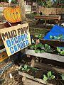 MUD Farm Organic Garden.jpg