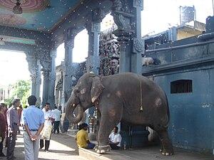 MV temple elephant.JPG