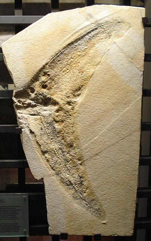 Aegirosaurus