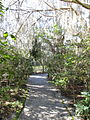 Magnolia Plantation and Gardens - Charleston, South Carolina (8555447507).jpg