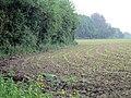 Maize field - geograph.org.uk - 451739.jpg