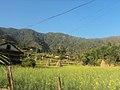 Majhuwa 45900, Nepal - panoramio.jpg