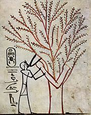 Tumba de Thutmose III: Isis con forma de diosa árbol, amamantando al faraón.