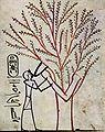 Maler der Grabkammer des Thutmosis III. 001.jpg