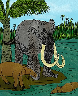 African mammoth - Image: Mammuthus africanavus