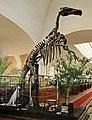Mandschurosaurus Amurensis..2H1A0401WI.jpg