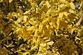 Mani ziedi My flowers - panoramio (9).jpg