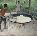 Manihot esculenta, Cassava (Yuca) preparation - Flickr - Dick Culbert.jpg