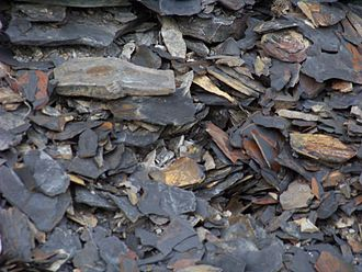 Marcellus Formation - Fragments below exposure of fissile Marcellus black shale at Marcellus, N.Y.