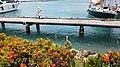 Marina in Oranjestad- 3.jpg