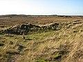 Marshland by Horsey - geograph.org.uk - 1083413.jpg