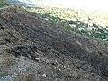 Matollar cremat a Collserola - P1300974.jpg