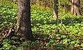 Matson's Woods (2) (8667534084).jpg