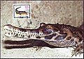 Maxicard 1985 GDR Rind MiNr2956 pm B002.jpg