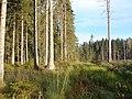 Mežs, Valgundes pagasts, Jelgavas novads, Latvia - panoramio.jpg