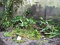 Meijer Gardens October 2014 58 (Carnivorous Plant House).jpg