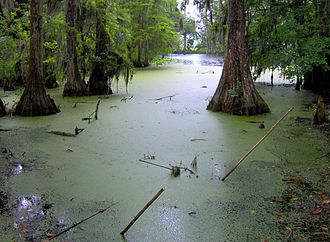 Middleton Place - Swamp in the plantation's undeveloped northwest section