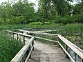 Miller Woods boardwalk.jpg