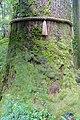 Moss - Hakone-jinja - Hakone, Japan - DSC05870.jpg