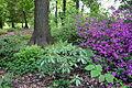 Mount Airy Arboretum - DSC03848.JPG