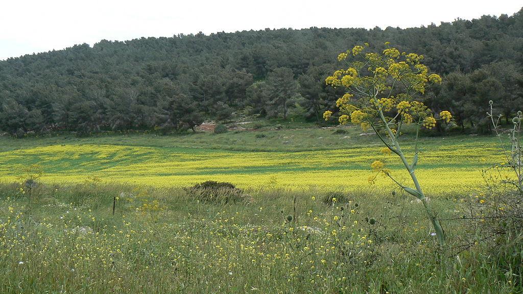 flower and grass field