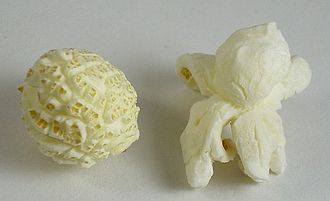 "Popcorn - ""Mushroom""-shaped popcorn, left, is less fragile and less tender than ""butterfly""-shaped, right."