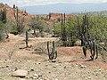 N1 Tatacoa desert (Columbia).jpg
