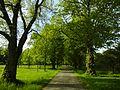 ND Lindenallee (38 Bäume) 01.jpg
