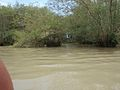 Nanga swamp.jpg