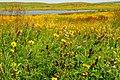 Native mixed grass prairie Sand Lake Wetland Management District 03 (14637775173).jpg