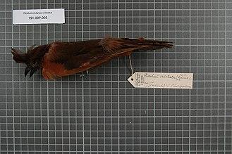 Из коллекции музея Натуралис в Лейдене