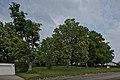 Naturdenkmal Linden am Sedanplatz, Kennung 82350290001, Gechingen-Bergwald 04.jpg