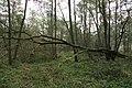 Nature reserve Dobrockovske hadce in autumn 2011 (3).JPG