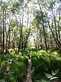 Naturschutzgebiet Holmmoor bei Quickborn 01.jpg