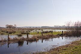 Naturschutzgebiet Meerbruchwiesen am Steinhuder Meer IMG 1614.jpg