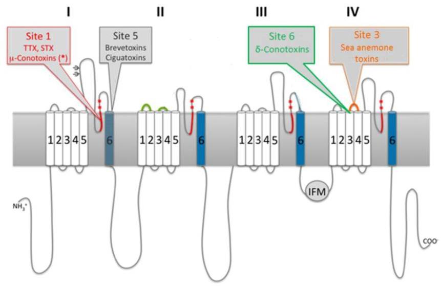 Neurotoxin Sodium Channel Binding Sites