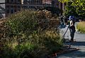 New York City High Line - Urban Forestry - 20150917-OSEC-LSC-0006 (21614842091).jpg