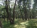 Niji Pine Grove 8.jpg