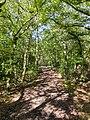 Nine Acre Wood, Welwyn Hatfield 1 2020-09-01.jpg